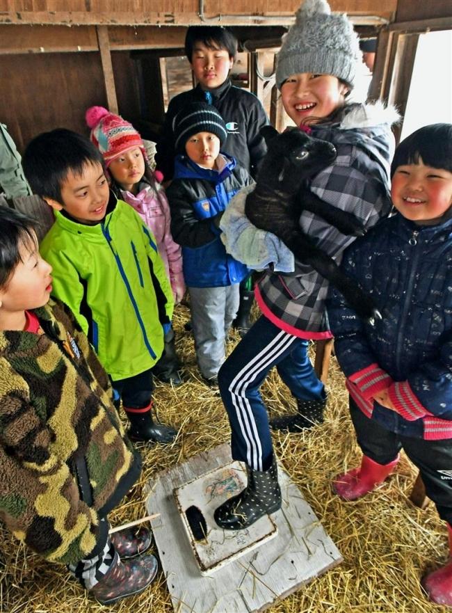 鹿追上幌内小学校でヒツジ誕生 児童が世話に奮闘中
