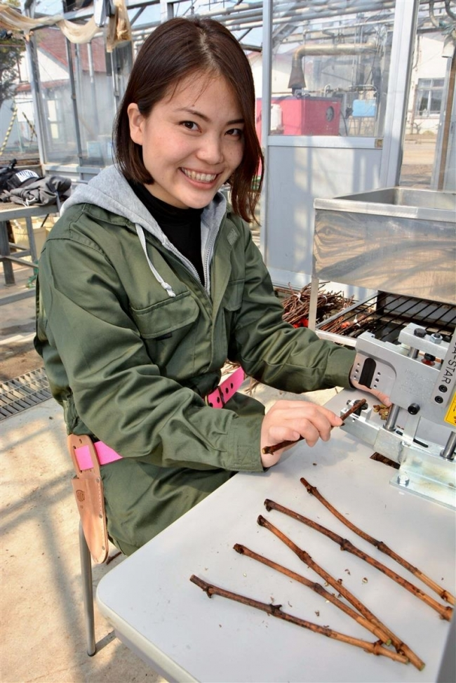 初のブドウ栽培担当に高橋さん 池田・地域おこし協力隊