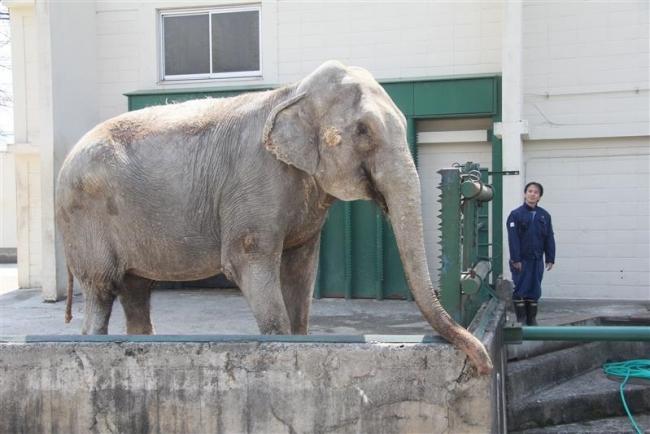 雌ゾウ「ナナ」56歳 国内最高齢 おびひろ動物園