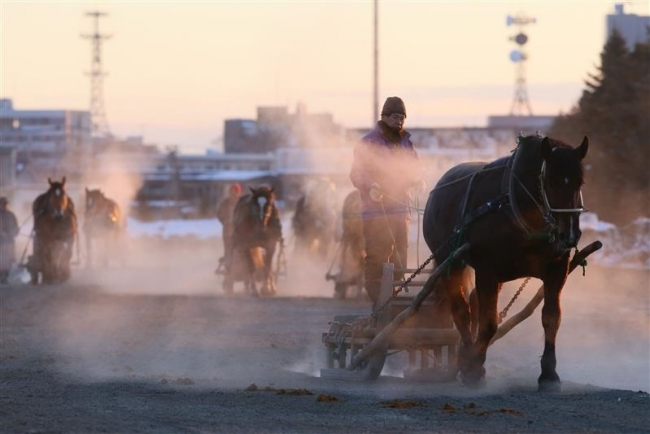 ばん馬の訓練を見よう 30日からばんえい朝調教ツアー