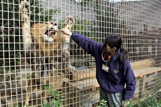 動物園のあるまち~魅せる再考(3)「快適さ 大牟田の危機救う 猛獣採血 麻酔なし」
