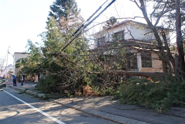 帯広で風速20・2メートル 倒木や屋根の破損相次ぐ