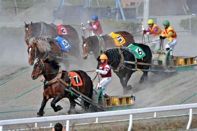 ばんえい十勝開幕 10周年の熱いレース始まる