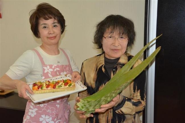 アロエで多彩 健康食 池田の神谷さん栽培 特産品とのコラボも
