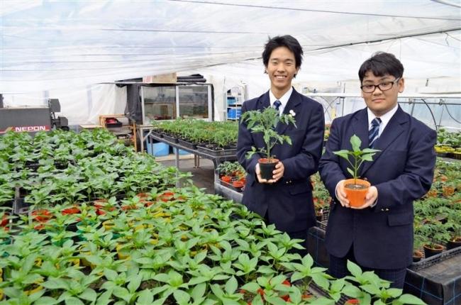 花・野菜苗いかが 16、17日に士幌高で販売会