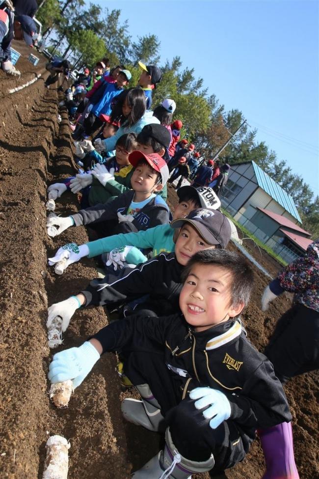 収穫を心待ち 川西小でナガイモ植え付け