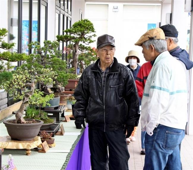 盆栽22点コスモールで展示 大樹仙樹会