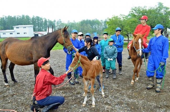 2年ぶり新馬が誕生 士幌高 セラピー活用で調教