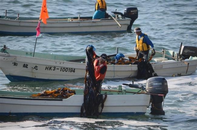 コンブ漁スタート 広尾で初日から100隻超