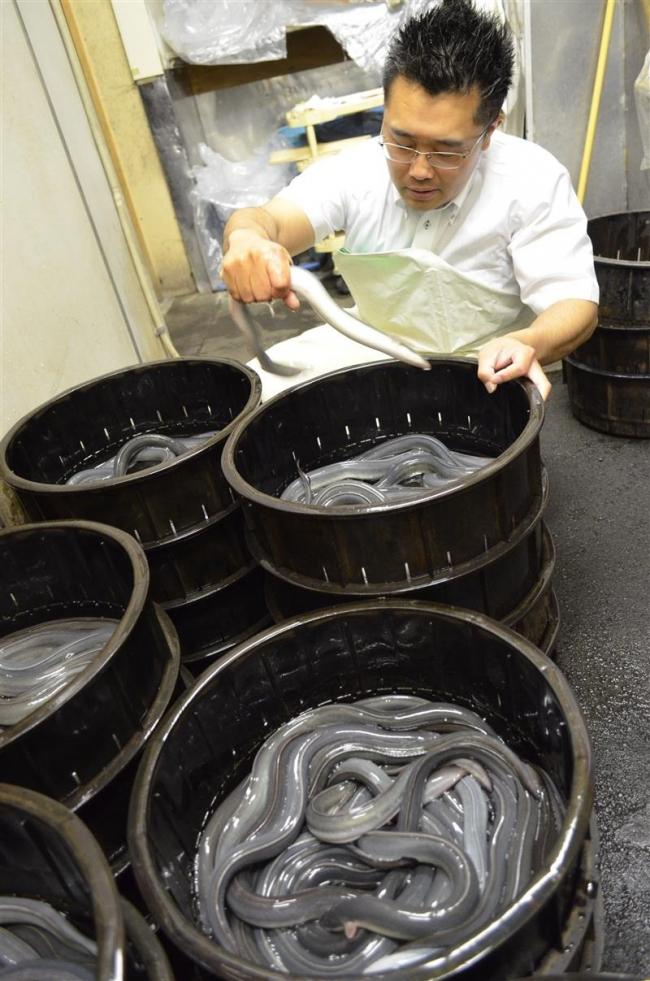ウナギで夏バテ解消 漁獲回復 1~2割安 25日は「土用丑の日」