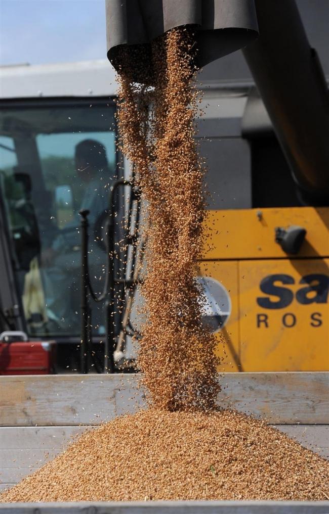 小麦豊作の手応え 収量は平年超、質も安定