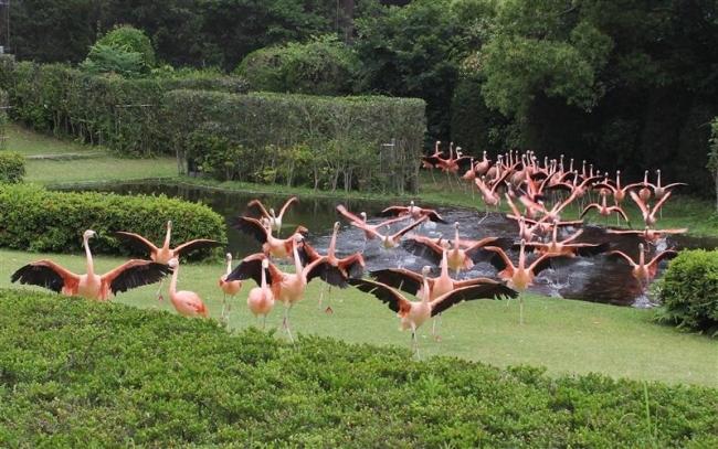 輝く動物園~宮崎編 習性 ショーに生かす 「飛ぶフラミンゴ」リーダーは飼育係