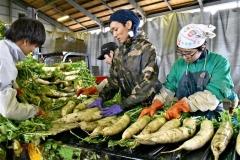 農業インターンシップ 市工業労政課とTASUKI連携で 大学