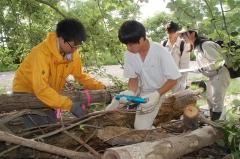 あの日から~台風1年「流木、土に返せ」