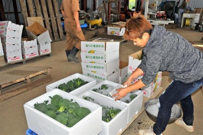 沖縄の市場に野菜出荷 芽室・ファームミリオン