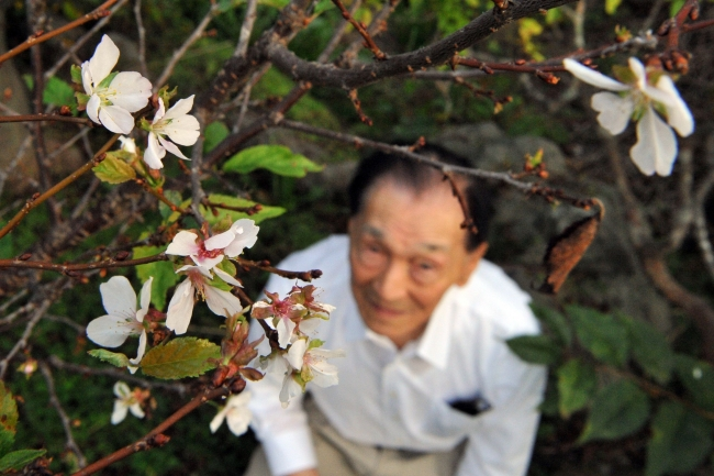 退院祝い サクラ咲く帯広の五嶋さん宅