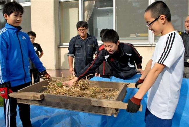 帯川西中1年生 豆の収穫を体験 JA青年部が協力