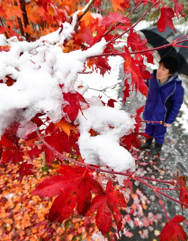 紅葉に雪 ぬかびら0.2度