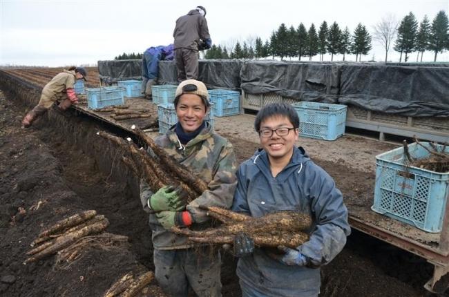 若者がナガイモ堀り体験 市とワタミ 農業インターンシップ