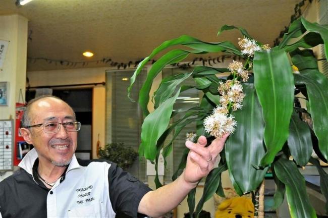 幸福の木が23年ぶりに開花 芽室の理容店