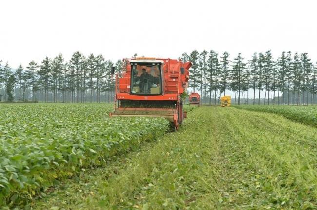 十勝 野菜も道内席巻 収穫量 8品目がトップ 道16年産調査
