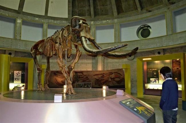 昨年度入館1万3858人 忠類ナウマン象記念館 10年で最多