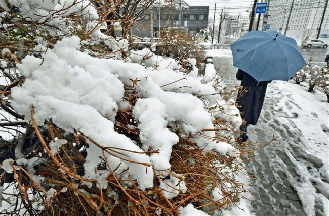 十勝管内で積雪 上札内で25センチ