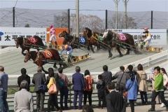 ファンや観光客が熱い声援 ばんえい競馬開幕