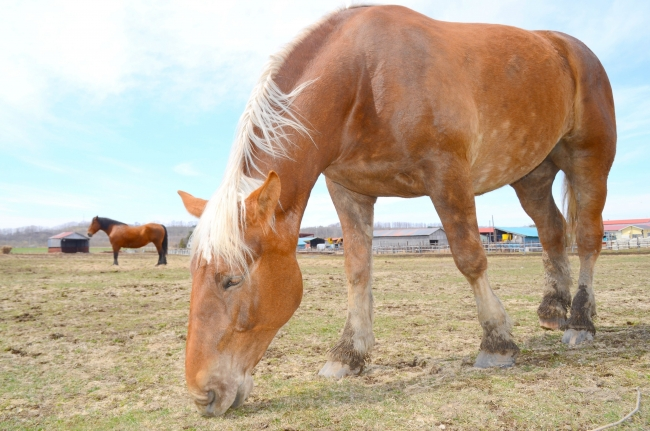 まちのインスタ映え(3)「本寺牧場 国道沿いのばん馬 本別」