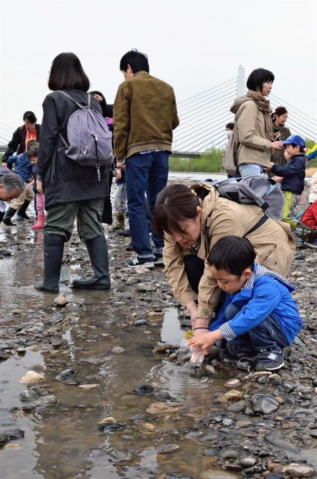 サケ稚魚4000匹放流 十勝川