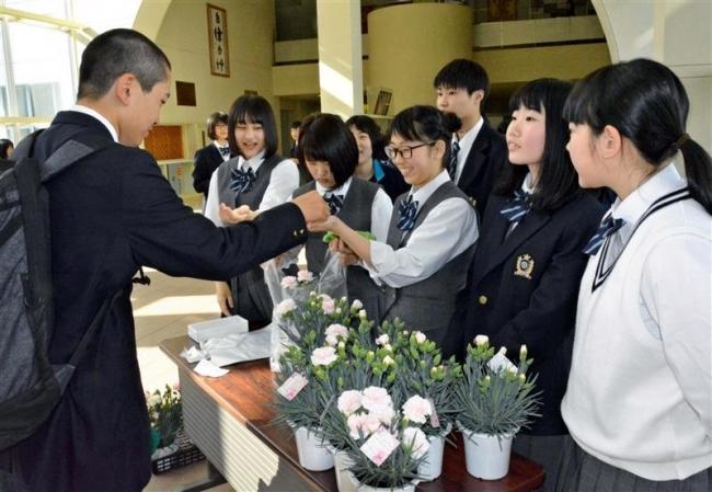 母の日前にカーネーションの鉢花販売 音更高校