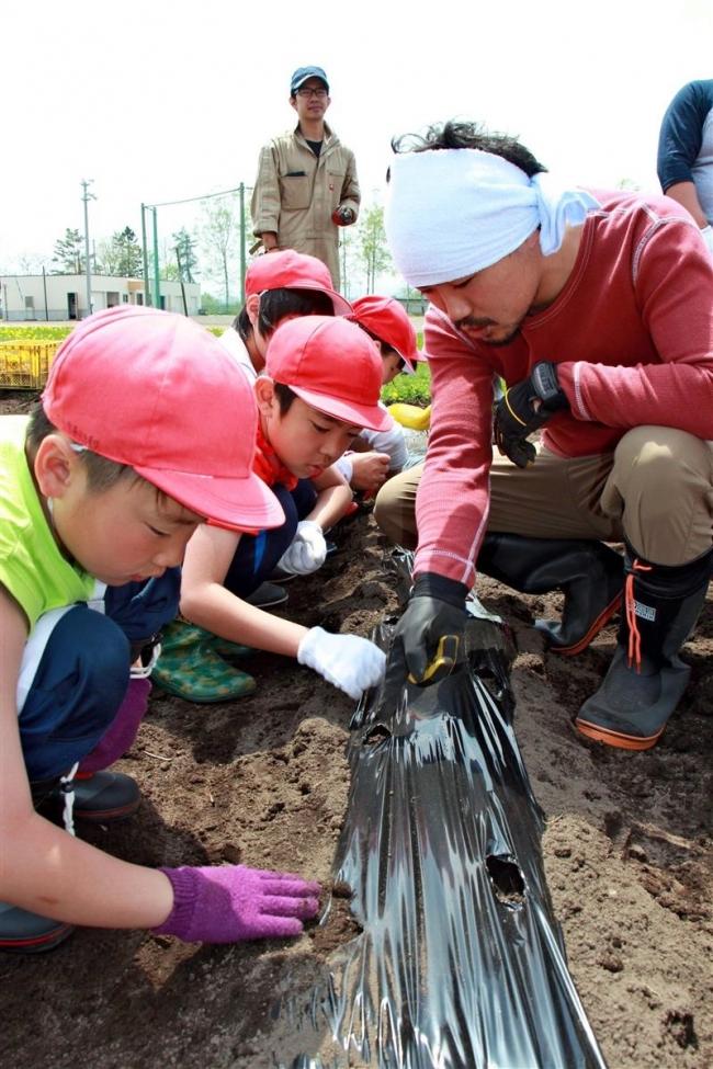 児童がイモと大豆の種まき 大樹小・100粒運動