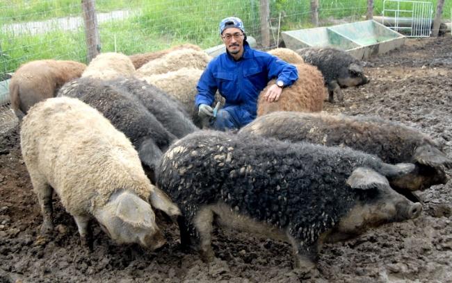 十勝産の「国宝」初提供 フェスにマンガリッツァ豚 丸勝