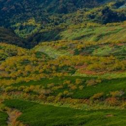緑岳高原沼