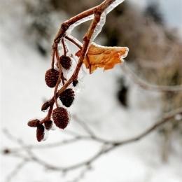 標高が上がると気温が下がり、降っていた雨が凍りつく