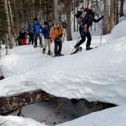登行のルートになっている「カラ川」。雪をかぶった倒木の上を歩く箇所も