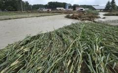 畑だった場所を削り取って流れる美生川(1日午前9時ごろ、芽室町伏美)