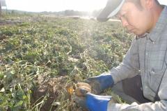 土砂に埋もれたマチルダを手に取る瀬川さん(1日、芽室町)
