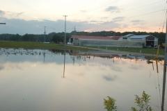浸水した畑(1日、芽室町)