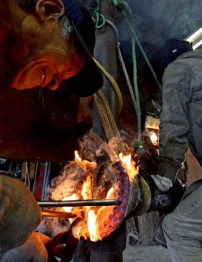 ばん馬の足元も冬仕様 蹄鉄付け替えシーズン