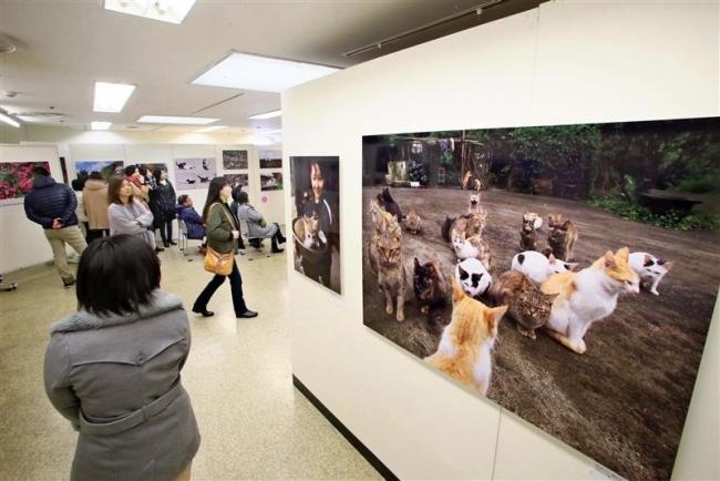 写真展「岩合光昭の世界ネコ歩き」藤丸で開幕
