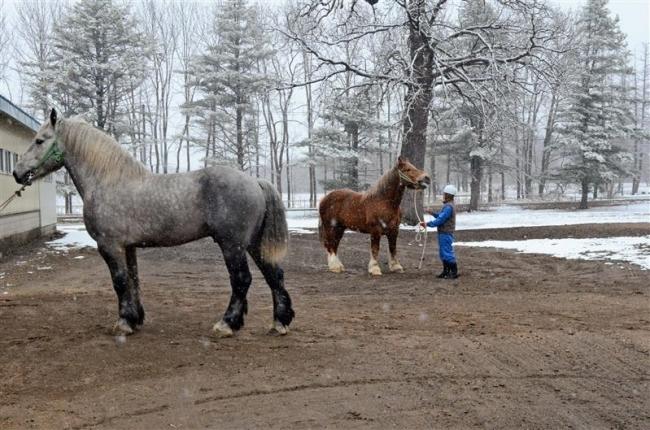 フランスから種雄馬導入 十勝牧場