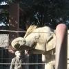 ゾウと市民の物語(4)「上野の森の4頭」