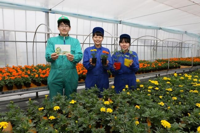 士幌高、苗で地域交流 15、16日に野菜や花販売会