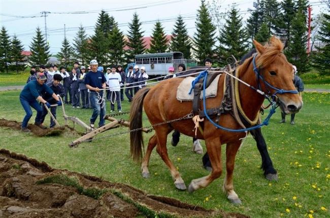 北広島の中学生が馬耕体験 大平原交流センター