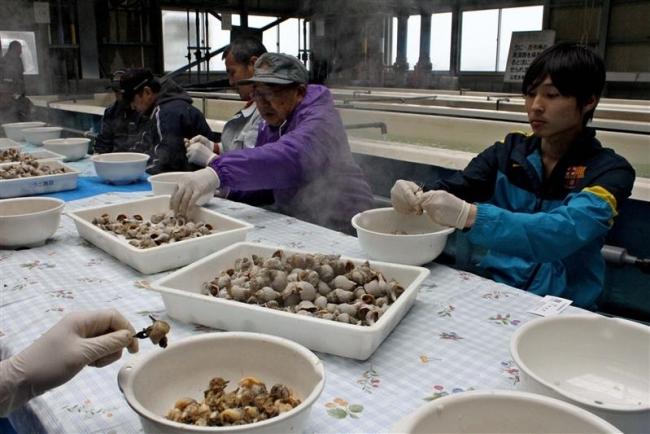エゾバイツブ給食へ殻むき 広尾漁協部会