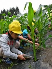 学校農園に給食残さの液肥散布 音更小 JAおとふけ協力