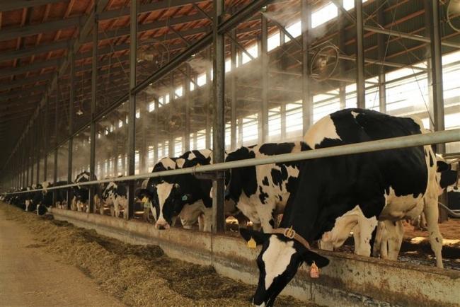 牛の夏バテ防止にミスト ドリームヒル