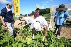 シニアハイツ鳳悠の契約栽培農場「ファーム倶楽部」で初収穫