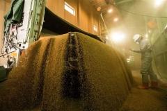 小麦降り注ぐ 農協サイロ受け入れ